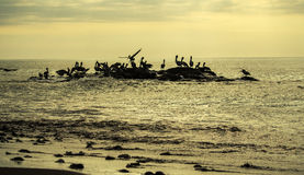 Tarcoles village - Costa Rica. Tarcoles village, pelicans in the water during the sunset - Puntarenas, Costa Rica Stock Photos