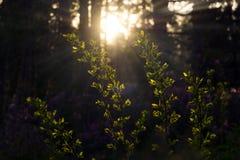 Tarde antes del bosque de la primavera imagen de archivo
