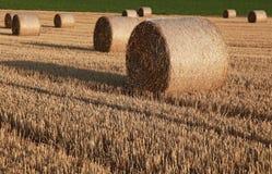 Tarde caliente del verano en campo cosechado Foto de archivo