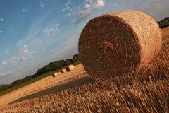 Tarde caliente del verano en el campo cosechado Imágenes de archivo libres de regalías