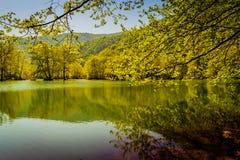Tarde da beira do lago Imagem de Stock
