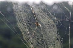 Tarde de la araña Fotografía de archivo libre de regalías