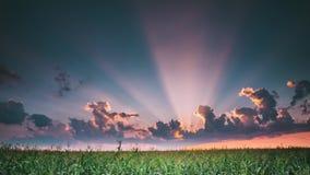 Tarde de la puesta del sol del verano sobre paisaje rural del campo de trigo del campo Cielo dramático escénico con las nubes de  almacen de metraje de vídeo