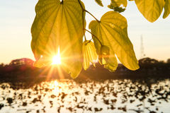 Tarde de la salida del sol Foto de archivo libre de regalías