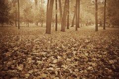 Tarde de niebla en el parque de la ciudad Foto de archivo libre de regalías