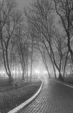 Tarde de niebla en el parque de la ciudad. Blanco y negro. Fotografía de archivo libre de regalías