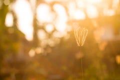 Tarde de oro en el prado Foto de archivo libre de regalías
