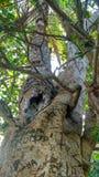 Tarde del árbol de la naturaleza Fotos de archivo libres de regalías