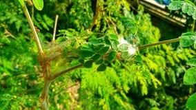 Tarde del árbol de la naturaleza Fotos de archivo