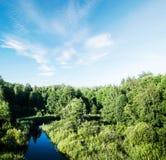 Tarde del bosque del otoño imagen de archivo