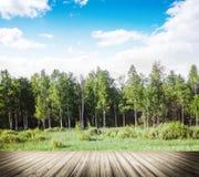 Tarde del bosque del otoño imagenes de archivo