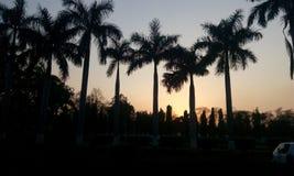 Tarde del día #beautiful de la India Imagen de archivo