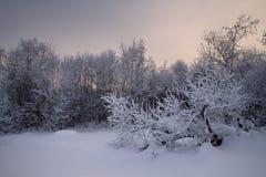 Tarde del invierno Foto de archivo