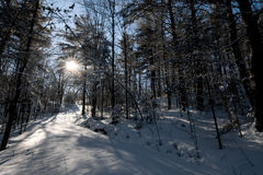 Tarde del invierno Fotos de archivo libres de regalías