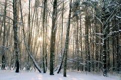 Tarde del invierno en bosque Foto de archivo libre de regalías