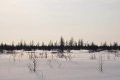 Tarde del invierno y lanskape escarchado del norte Fotos de archivo libres de regalías