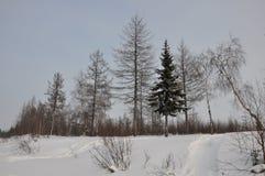 Tarde del invierno y lanskape escarchado del norte fotos de archivo