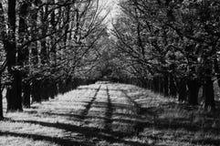 Tarde del otoño Fotos de archivo