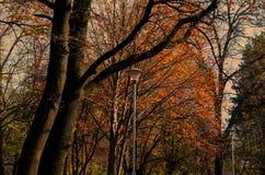 tarde del otoño en el parque soleado Fotografía de archivo libre de regalías