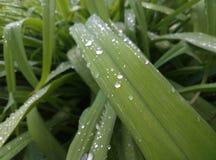 tarde del verano de las plantas de jardín foto de archivo