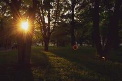 Tarde del verano en Central Park, Nueva York Vista hermosa de la ciudad foto de archivo libre de regalías