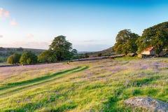 Tarde del verano en dartmoor Fotografía de archivo