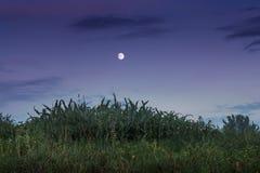 Tarde del verano o del otoño, la luna contra la perspectiva de una d imagen de archivo libre de regalías