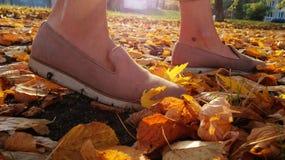 Tarde do outono da caminhada em um trajeto espalhado foto de stock
