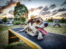 Tarde do parque do cão imagens de stock royalty free