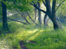 Tarde en bosque Imagen de archivo libre de regalías