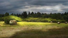 Tarde en el bosque. Imagen de archivo libre de regalías