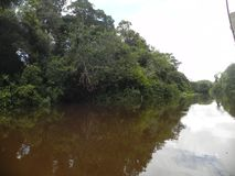 Tarde en el bosque del Amazonas imagen de archivo libre de regalías