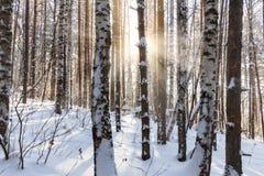 Tarde en el bosque del invierno Fotos de archivo libres de regalías