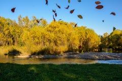 Tarde en el bosque del otoño Foto de archivo