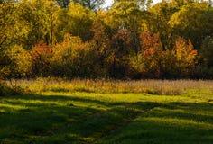 Tarde en el bosque del otoño Fotografía de archivo libre de regalías