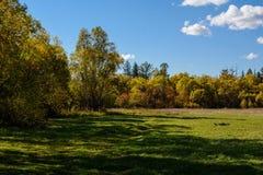 Tarde en el bosque del otoño Imagenes de archivo