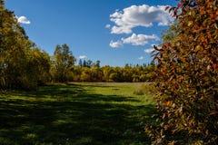 Tarde en el bosque del otoño Foto de archivo libre de regalías