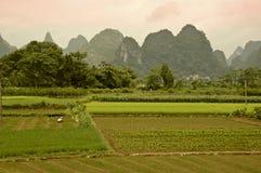 Tarde en el campo del arroz Fotos de archivo
