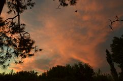 Tarde en el cielo & x28;sunset in the sky& x29;. Cielo colores tarde sunset sky royalty free stock images