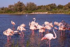 Tarde en el parque de Camargue, Francia Fotografía de archivo
