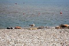 Tarde en la playa Imágenes de archivo libres de regalías