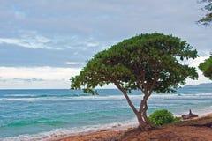 Tarde en las zonas tropicales fotografía de archivo libre de regalías