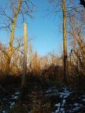 Tarde ensolarada com madeiras do inverno fotografia de stock