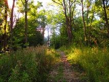 Tarde Forest Path Imagenes de archivo