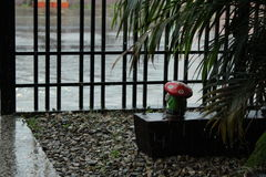 Tarde lluviosa del hombre de la seta del yeso en Barinas Fotos de archivo libres de regalías
