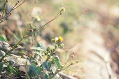 Tarde minúscula de la flor del fondo Fotos de archivo