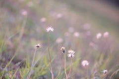 Tarde minúscula de la flor del fondo Fotografía de archivo libre de regalías