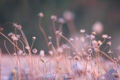 Tarde minúscula de la flor del fondo Fotografía de archivo
