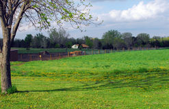 Tarde na exploração agrícola do cavalo Fotografia de Stock