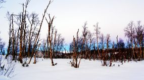 Tarde Nevado en el bosque del parque Fotos de archivo